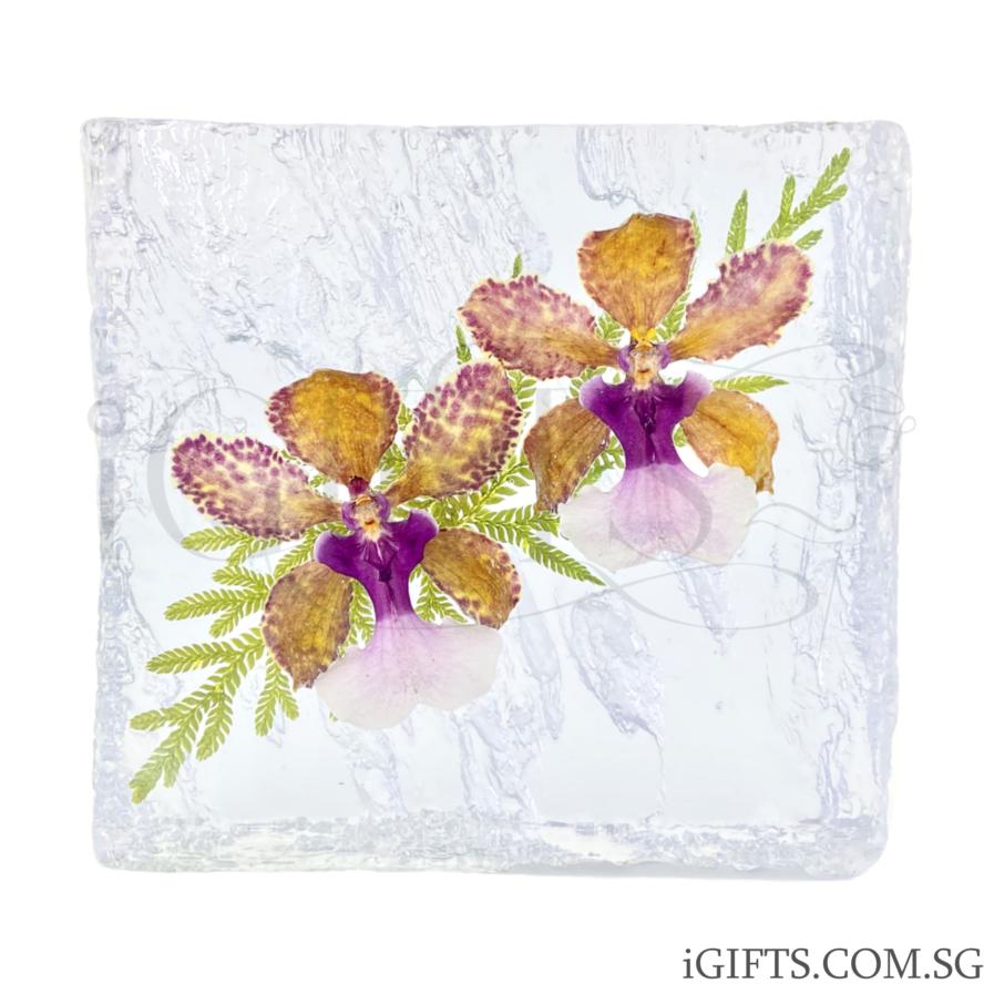 Oncidium haematochilum Orchid Crystal