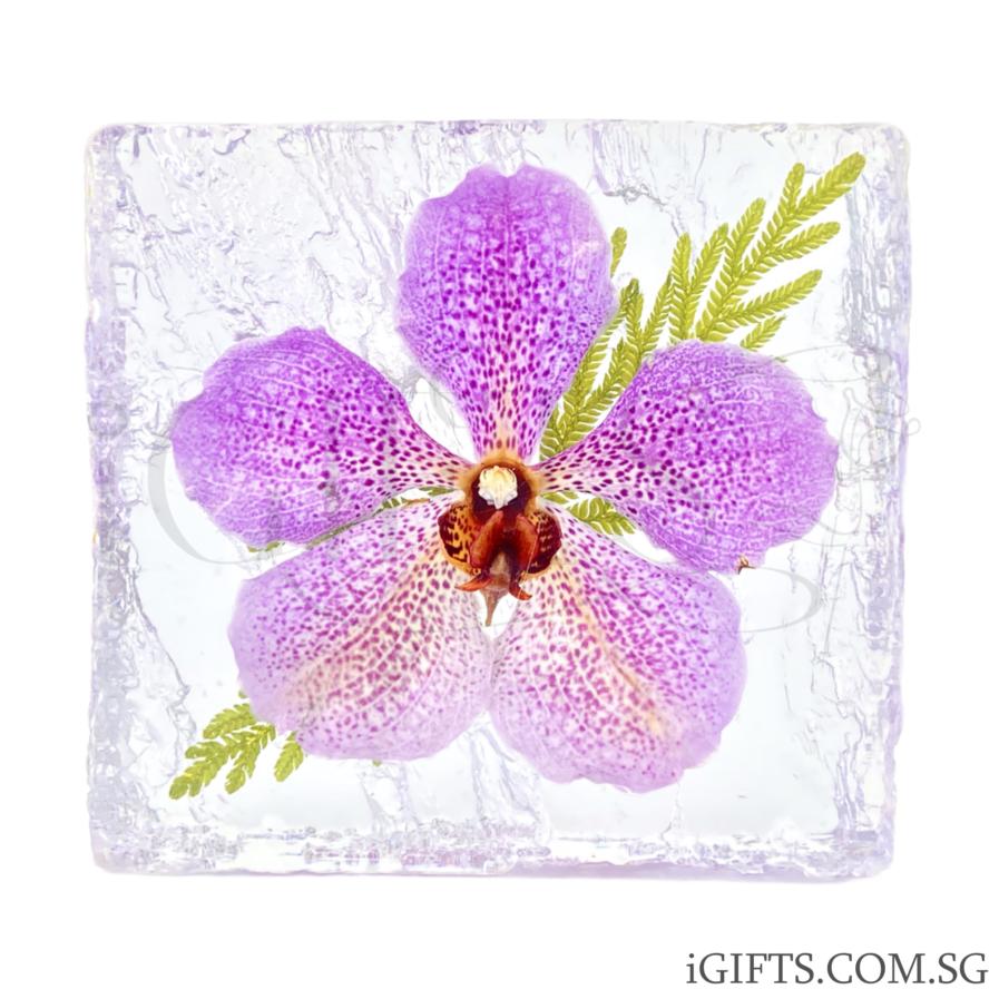 Papilionanda Marlie Dolera Orchid CrystalPapilionanda Marlie Dolera Orchid Crystal