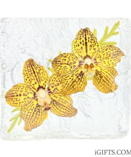 Vanda Mimi Palmer Orchid Crystal (2)